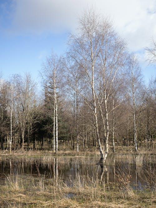 Kostenloses Stock Foto zu bäume, gras, himmel, wasser