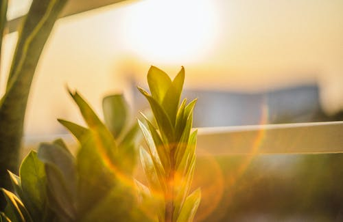 Immagine gratuita di pomeriggio soleggiato