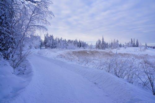 คลังภาพถ่ายฟรี ของ snowwy