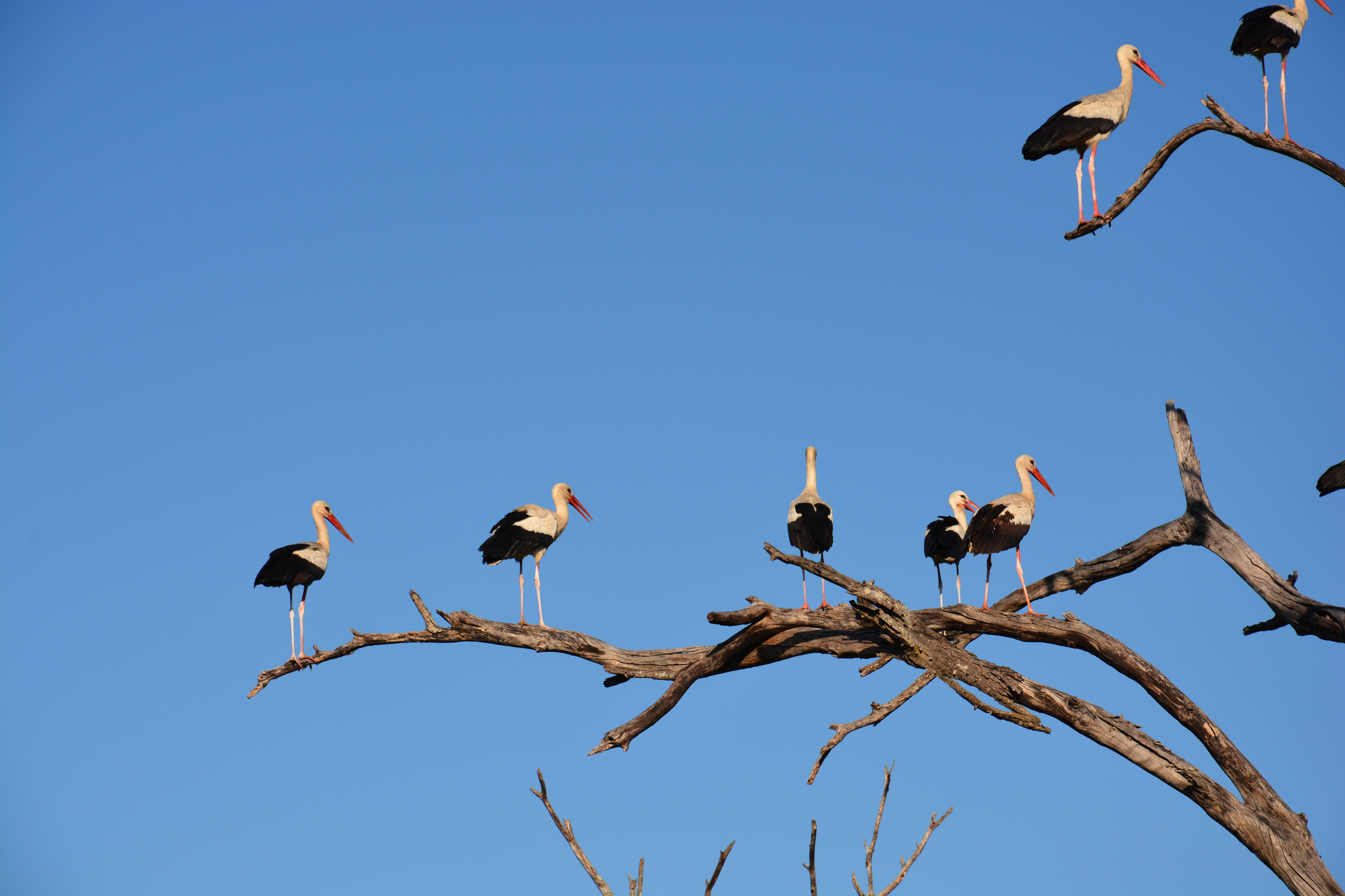 White and Black Long Beaked Birds on Brown Tree Branch