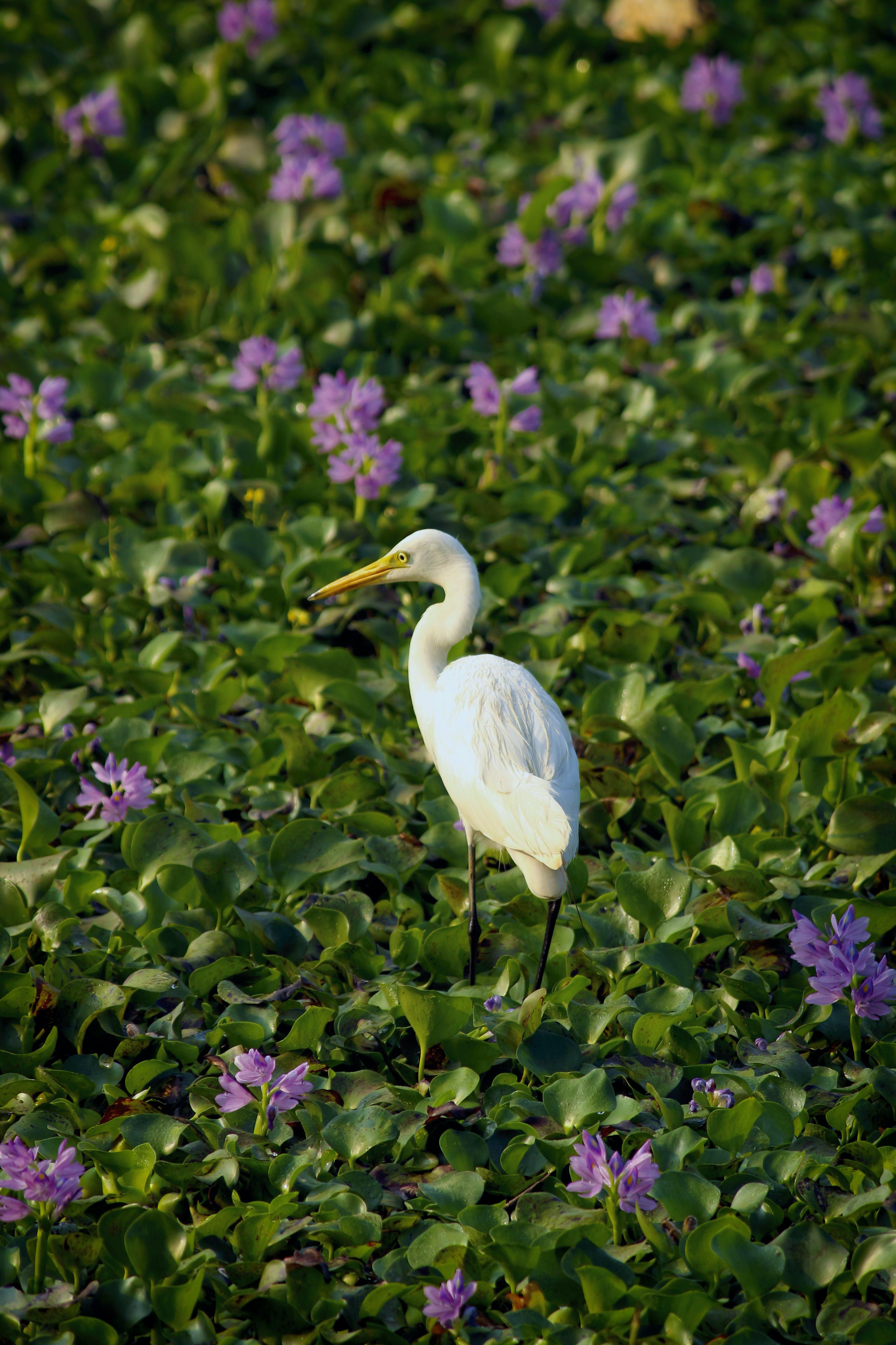 White Bird Decor on Green Grass Field