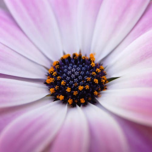 Close-up Photo of Purple Flower in Bloom