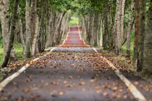 Free stock photo of road, nature, weather, trees