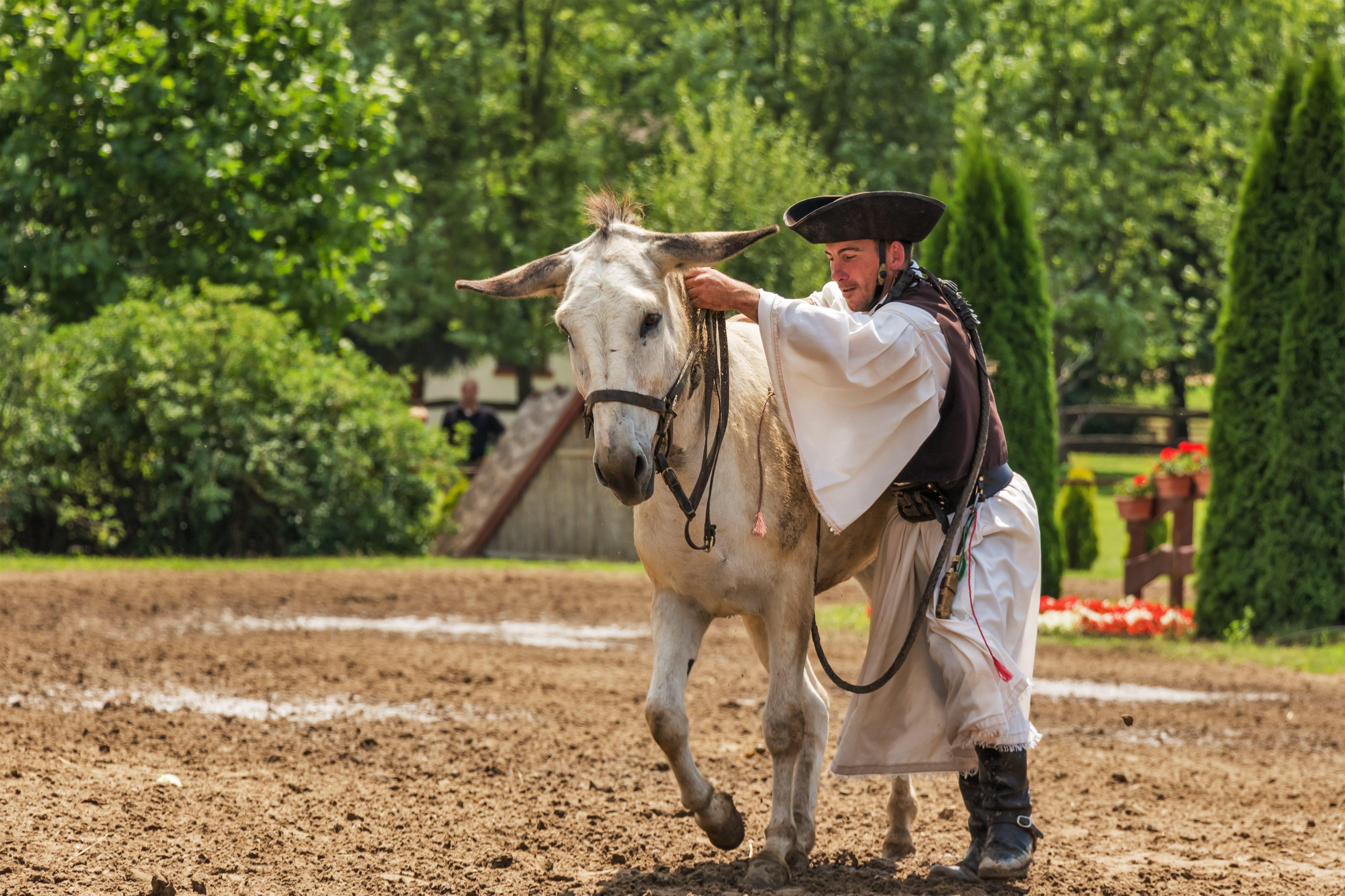 Man Holding White Horse