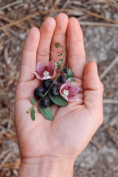 Person Holding Berries and Flowers