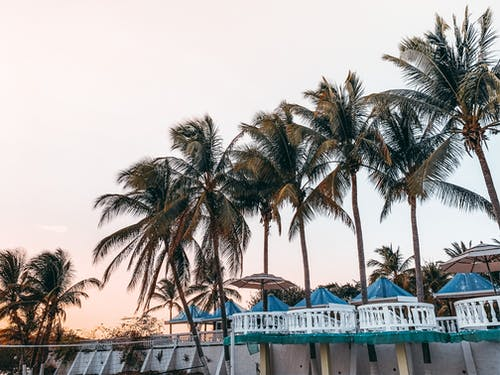Ombrelloni Blu Sulla Terrazza Del Resort Vicino A Palme Esotiche