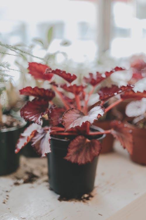 Foto stok gratis bunga, cinta, daun, di luar rumah