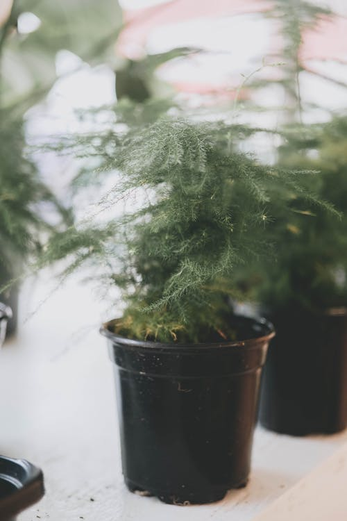 Free stock photo of greenery, plants, studio