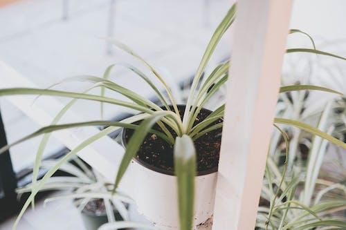 Foto stok gratis kilang, pot, tanaman, tanaman dalam pot