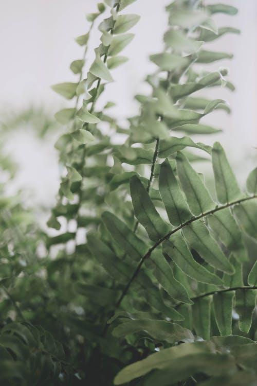 Foto stok gratis Daun-daun, dedaunan, hijau, kilang