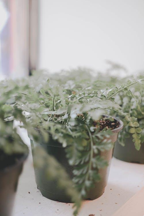Foto stok gratis agrikultura, air, bunga, dalam ruangan