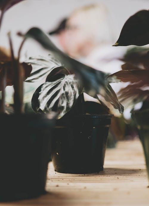 Foto stok gratis studio, tanaman hijau