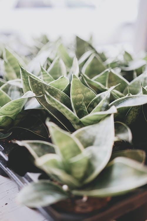 Foto stok gratis Daun-daun, dedaunan, kedalaman lapangan