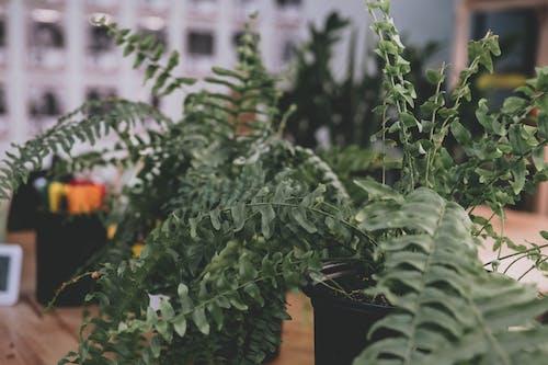 Foto stok gratis agrikultura, bunga, dalam ruangan, daun
