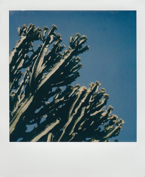 Foto stok gratis abstrak, air, bayangan hitam, daun