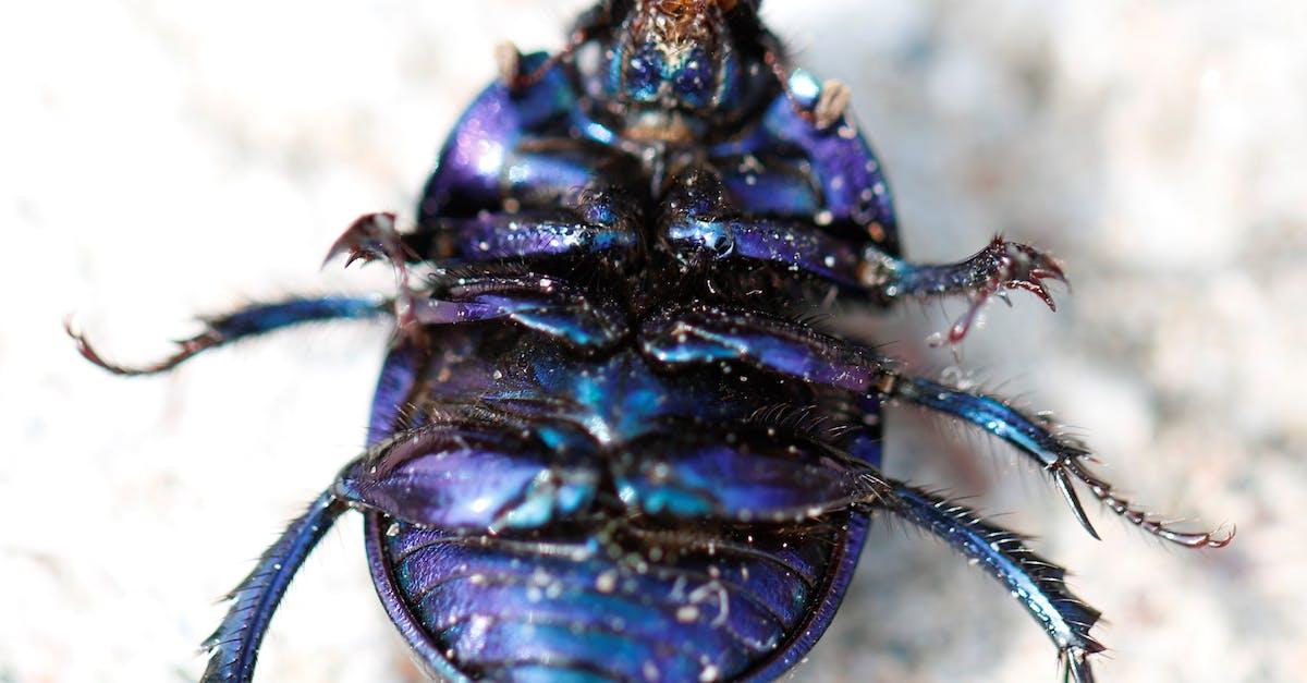 картинка синего жука профессиональный