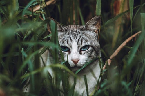 Grey Tabby Cat on Green Grass