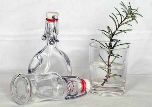 Kostenloses Stock Foto zu wasser, flaschen, glas, pflanze