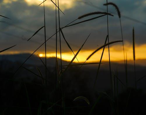 Бесплатное стоковое фото с апельсин, былинка, горы