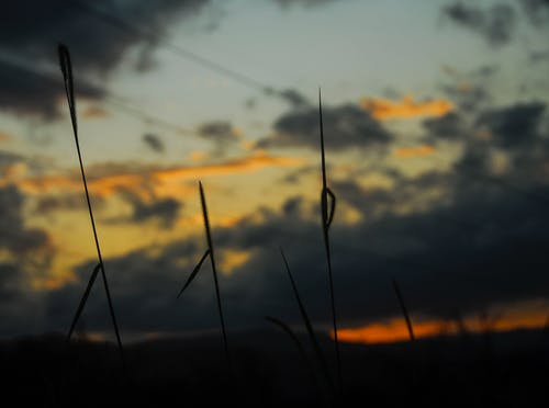 Бесплатное стоковое фото с апельсин, былинка, голубой