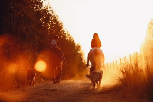 Back view of anonymous teenage boy and girl riding horses on rural road near obedient dogs during bright sunset