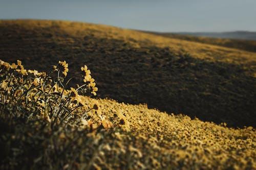 Foto profissional grátis de amarelo, ao ar livre, área, campo