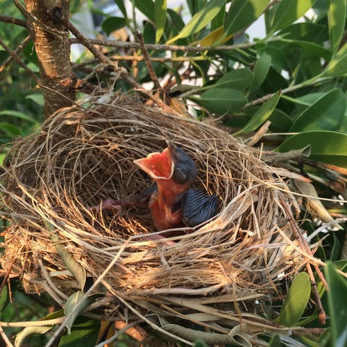 Blue and Brown Bird on Nest