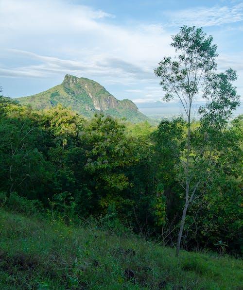 木, 緑の山々, 緑の草の無料の写真素材