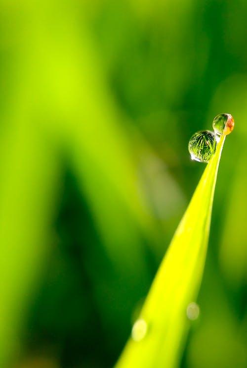 Gratis lagerfoto af close-up, dråber, dug, grøn
