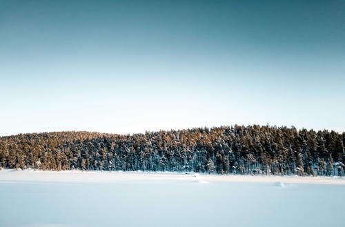 Green Trees on Snow Covered Ground