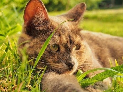 Cat On Green Grass