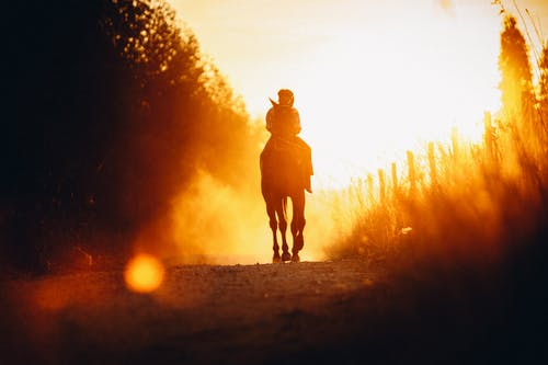Low angle silhouette of anonymous person riding horse in rural field near trees during bright sundown