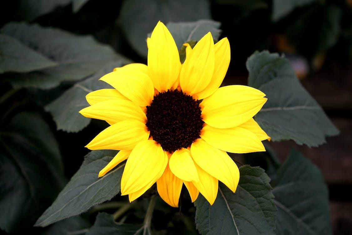 blomst, blomstrende, delikat