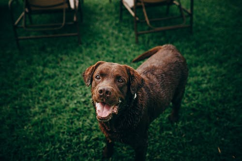 Brown Short Coated Dog On Green Grass