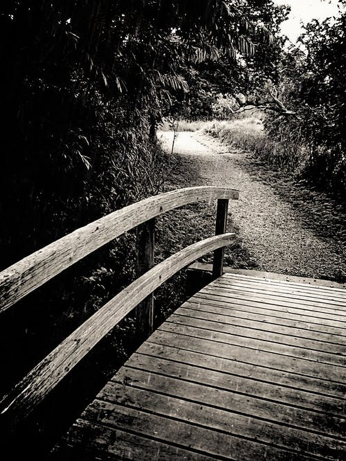 Free stock photo of nature trail, pathway