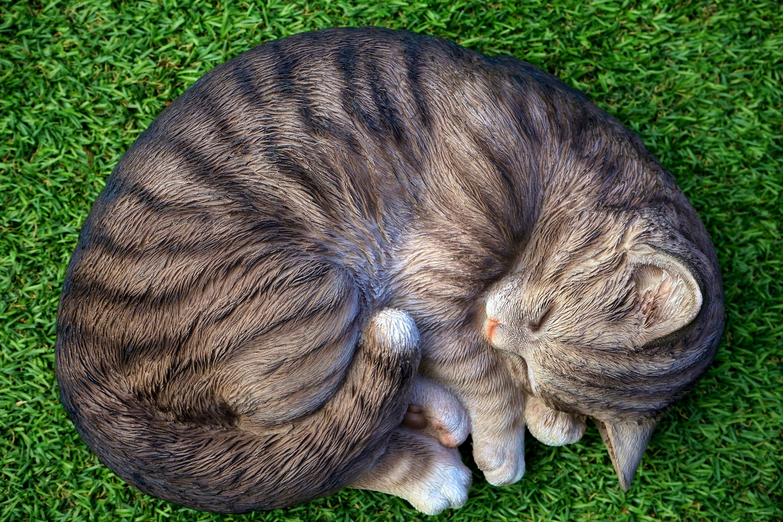 Cat Lying on Green Grass