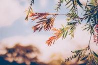 blur, leaves, tree