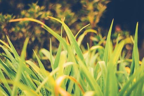 大自然, 天性, 常綠, 綠色 的 免费素材照片