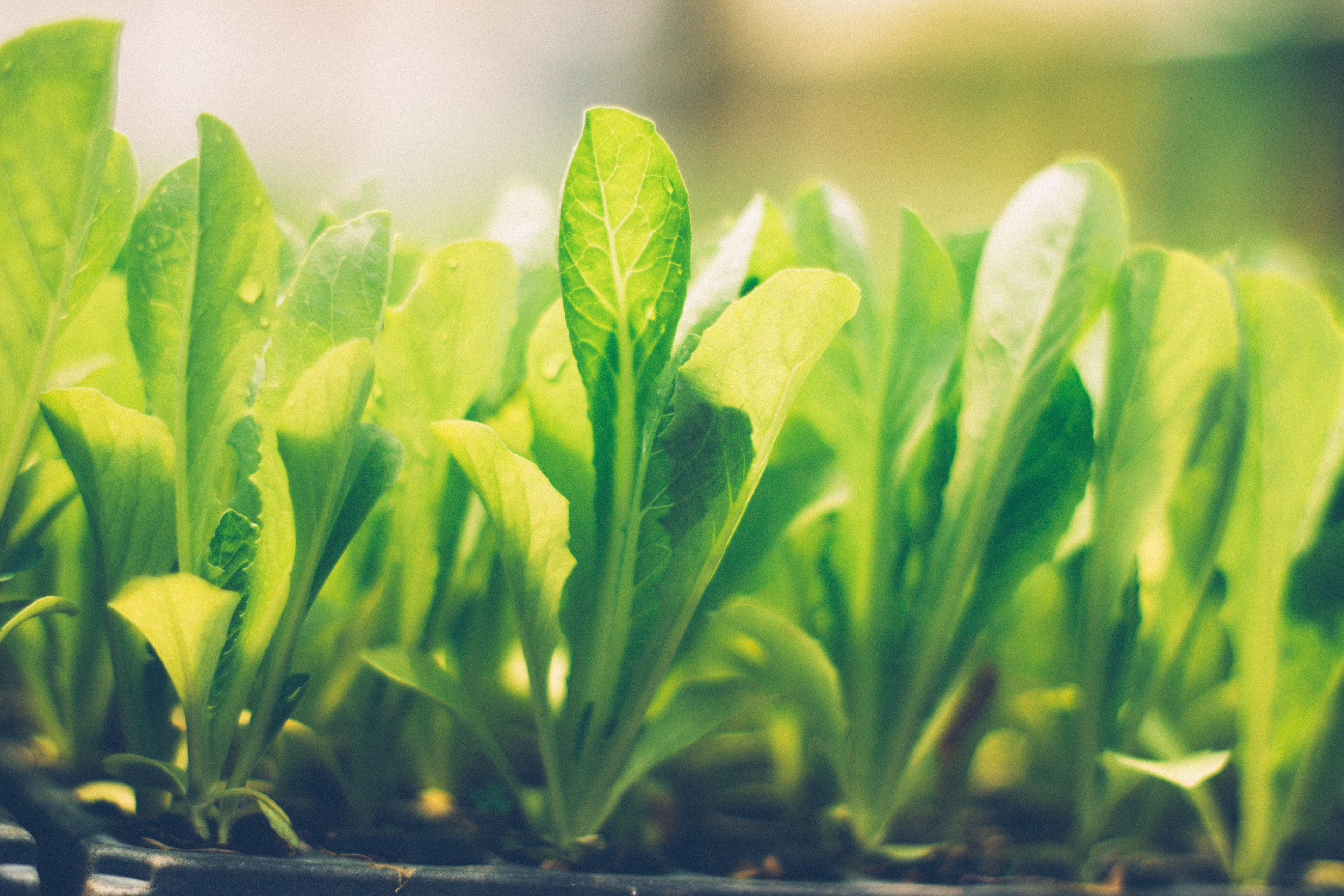 Free stock photo of green, greenery, natural, naturaleza