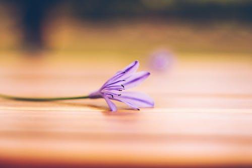 原本, 可愛, 天性, 紫羅蘭 的 免费素材照片