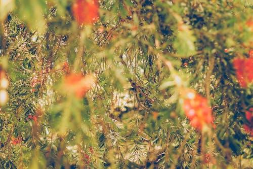 Kostnadsfri bild av colores, grön, grönska, hojas