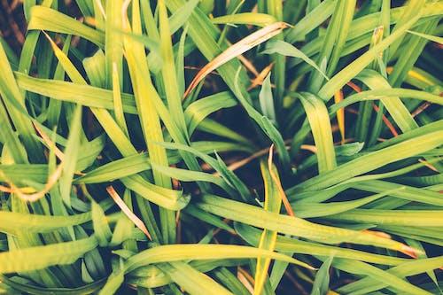 naturaleza, 天性, 漂亮, 綠化 的 免费素材照片
