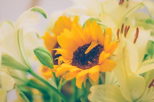 Kostnadsfri bild av detalj, färger, girasol, gul