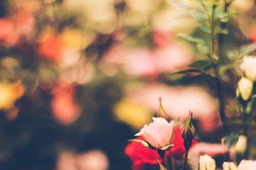 Kostnadsfri bild av ledsen, moder natur, natur, naturaleza