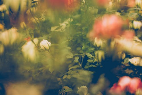 Kostnadsfri bild av colores, desenfoque, grön, hojas