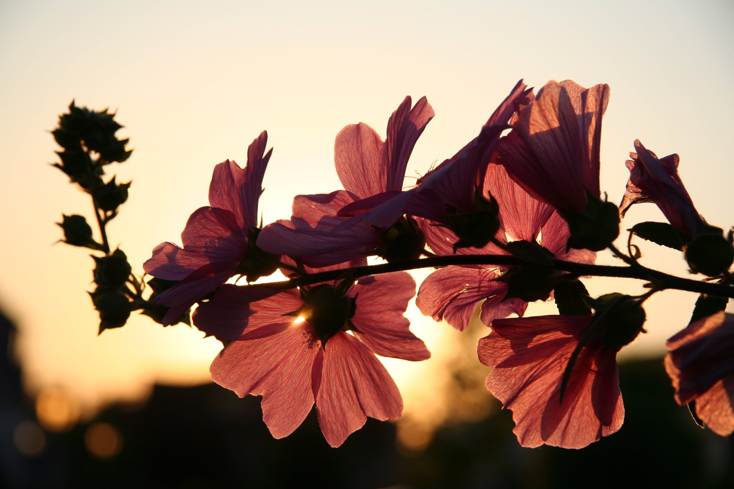 Photo of Brown Petaled Flower during Daytime