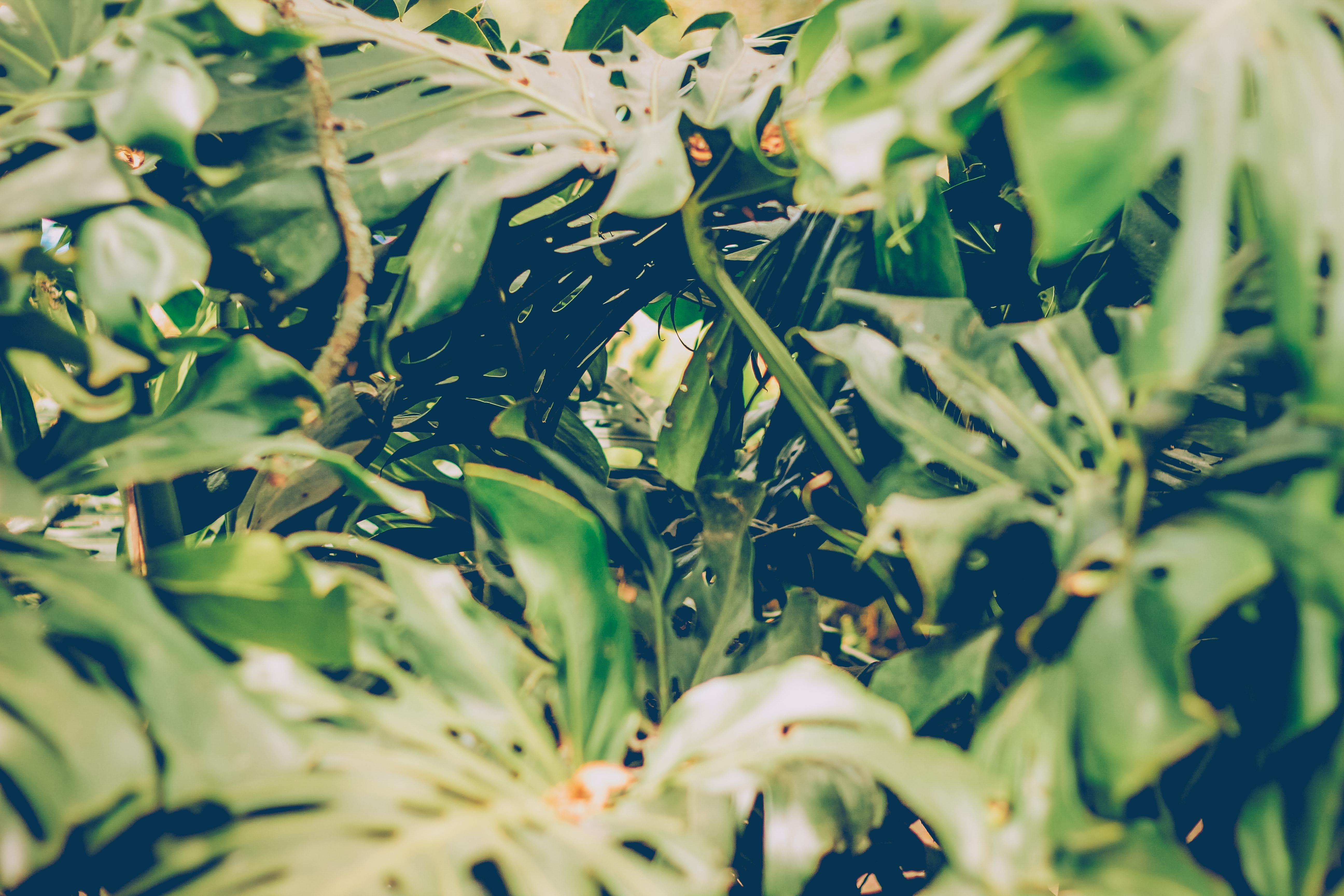 of natural, naturaleza, tropical, verde