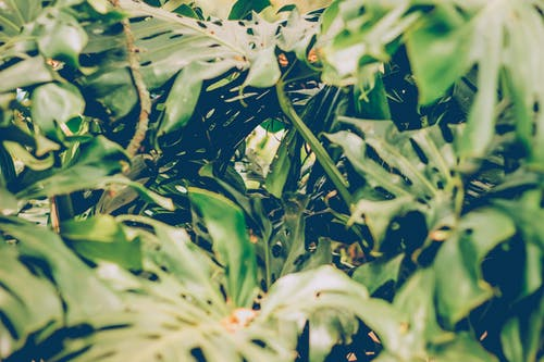 Kostnadsfri bild av naturaleza, naturlig, tropisk, verde