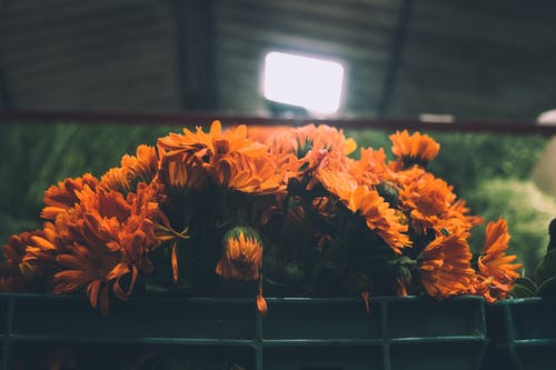 Kostnadsfri bild av apelsin, blomma, blommor, bukett