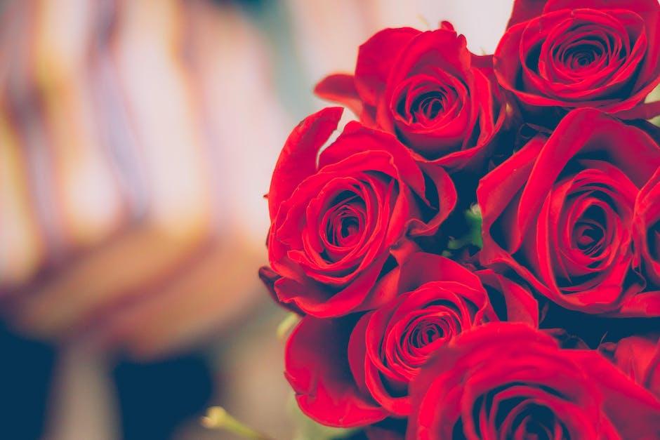 red roses, valentine's day, roses, valentine's chocolate, dark chocolate edibles, chocolate edibles